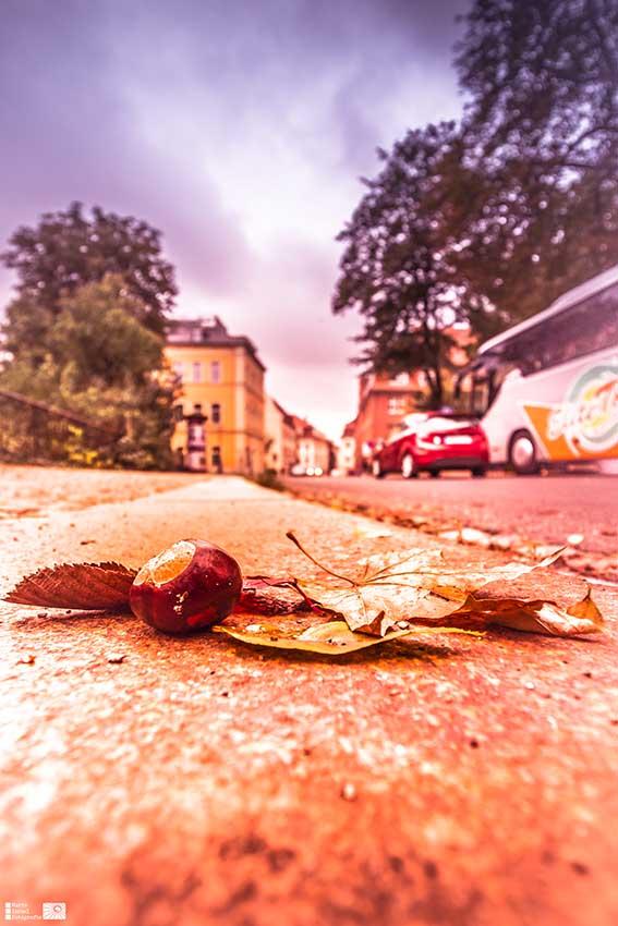 Herbst an der Frauenstraße