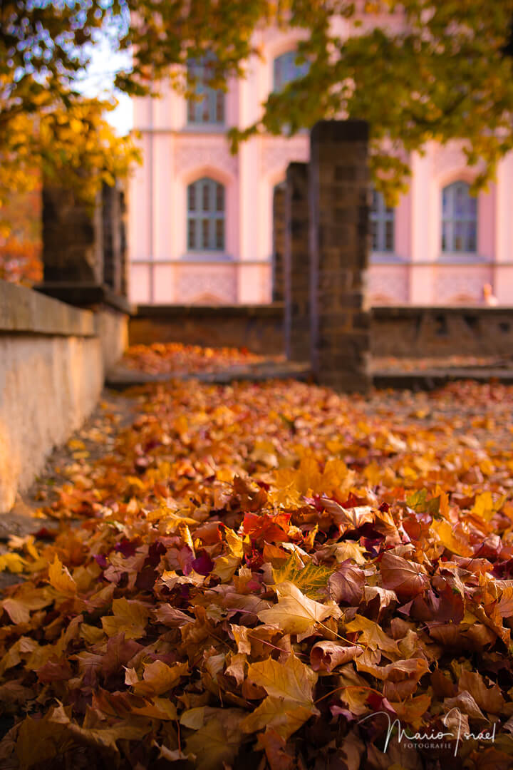 Blätterberge im Steingarten