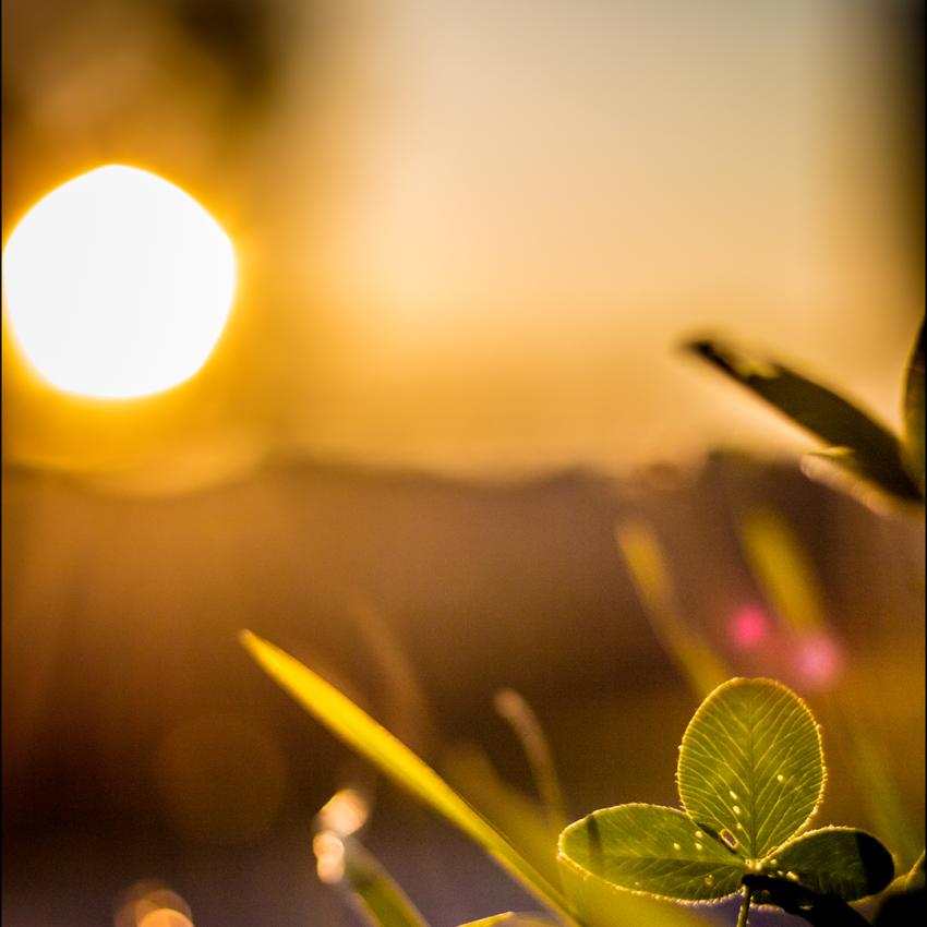 Glücklicher Sonnenuntergang