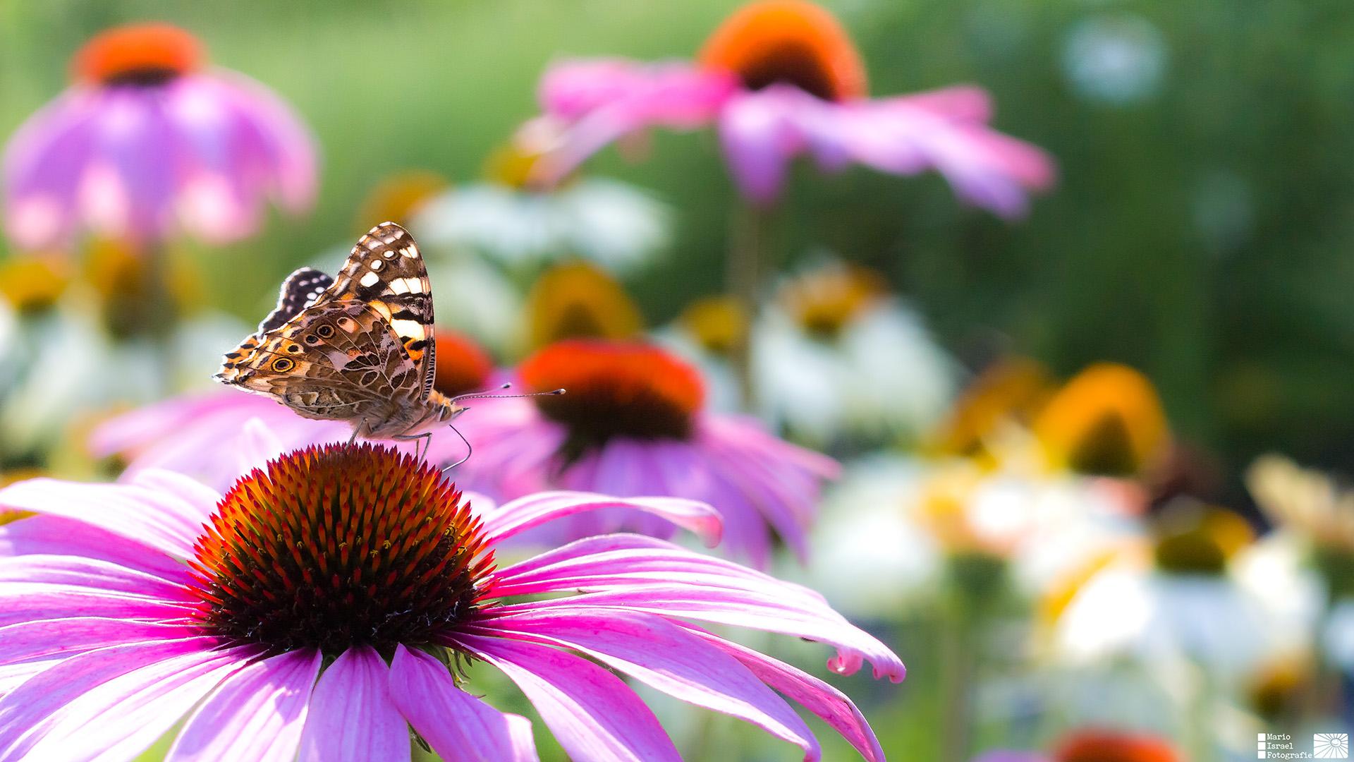 Blumenbeet am Olbersdorfer See