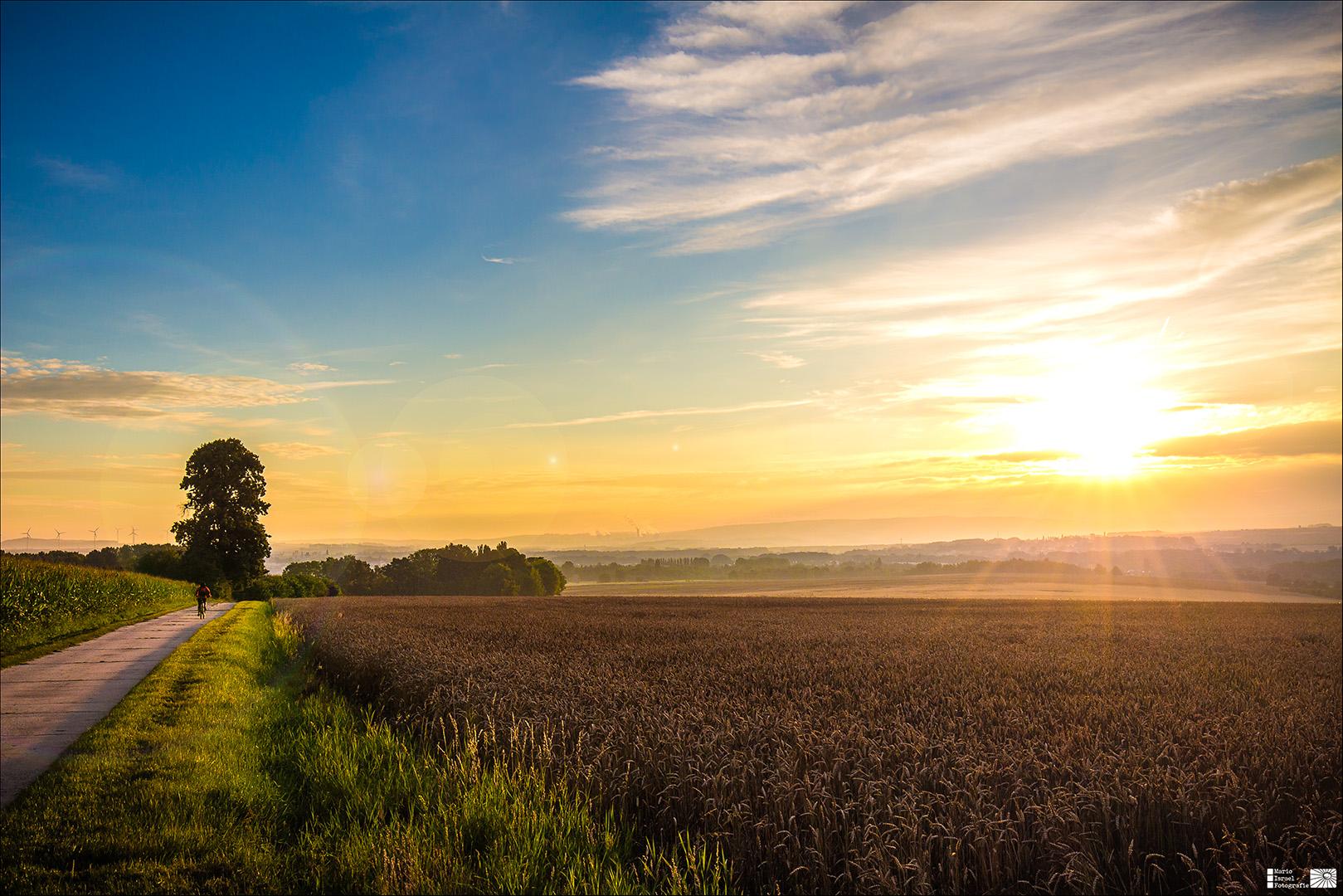 Napolenoslinde, Mittelweg und Sonnenaufgang