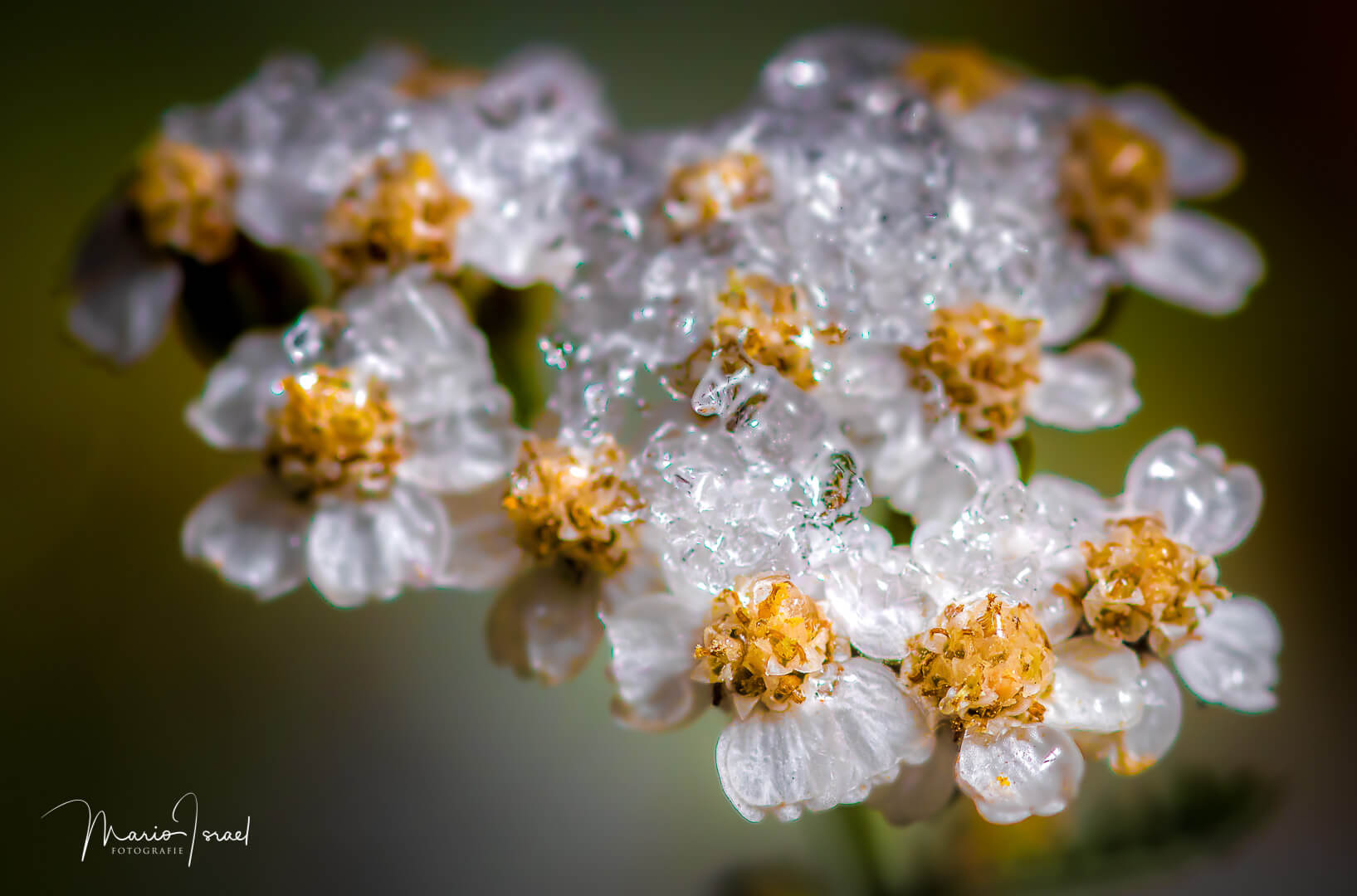 Eisblüten